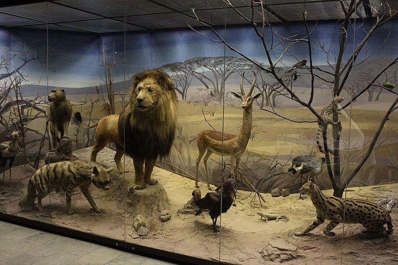 Дарвиновский музей +
